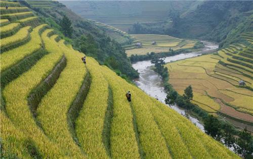 Agriculture in Dimapur