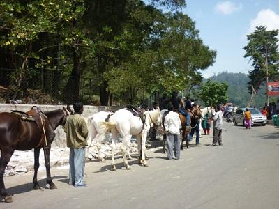 Kodaikanal Horse Riding