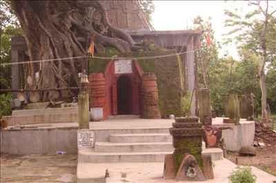 Ancient Banyan at Medhas Ashram in Garh Jungle