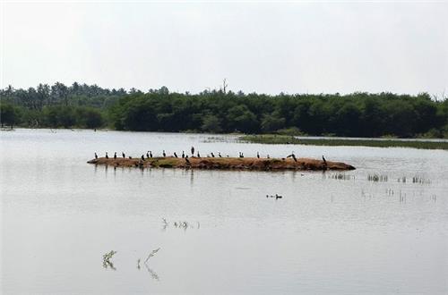 Vellode Bird Sanctuary