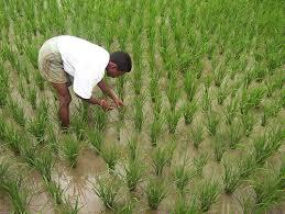 Agriculture in Etah