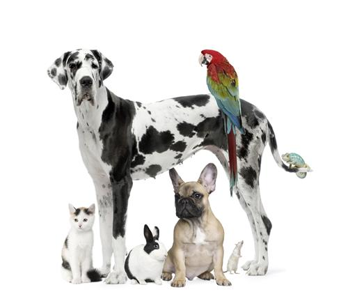 pet stores in faridabad