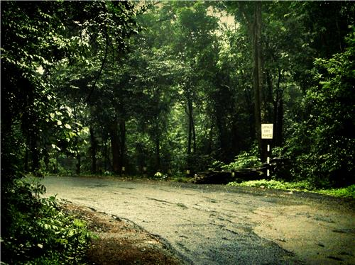 Way to the Mollem National Park-Credit Google