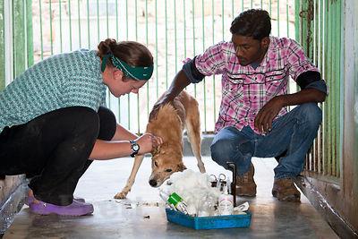 Veterinary Hospitals Calangute