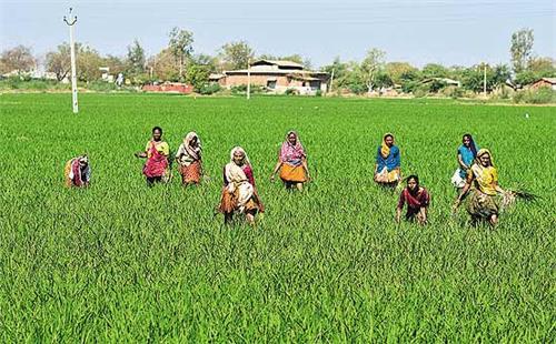 Farming in Gujarat