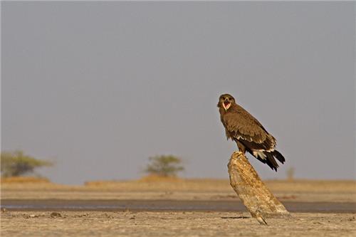 Wildlife in Gujarat