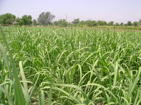 Agriculture in Bhabhar