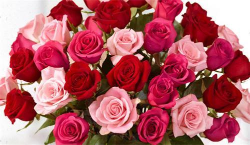 Flower Shops in Gwalior
