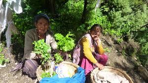 Culture of Haldwani