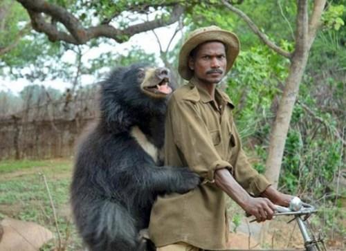 Daroji Sloth Bear, Hampi