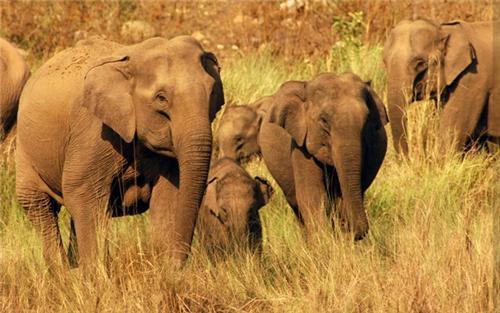 Rajaji National Park in Haridwar Fauna