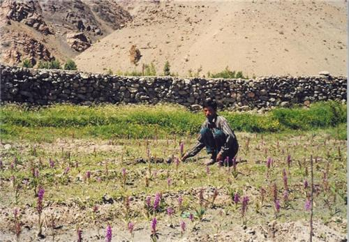 Farming Business in Himachal Pradesh