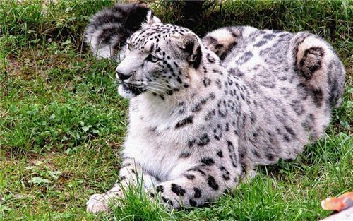 Wildlife Watching in Himachal Pradesh