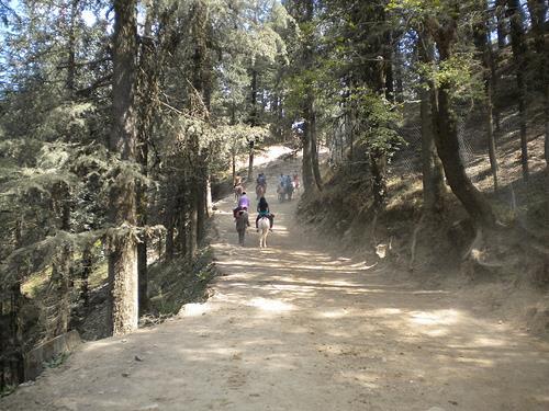 Sightseeing Kufri