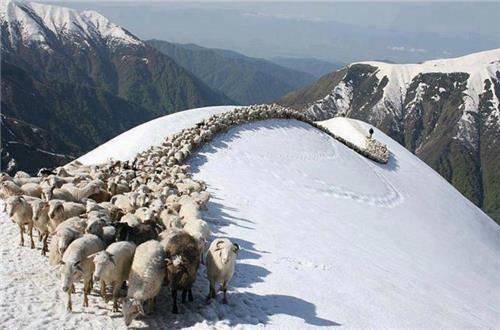 Tripping Himachal Pradesh