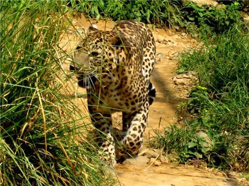 Zoos in Himachal Pradesh