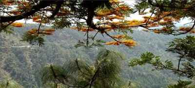 Well Known Tourism of Kasauli in Himachal Pradesh