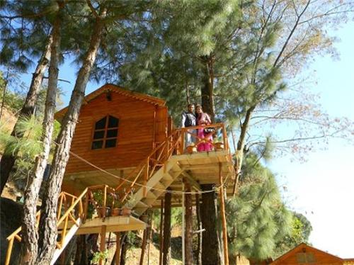 Tree House Available in Pinewood Cottage Resort in Kasauli