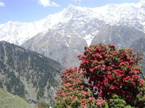 Trekking at Dharamsala