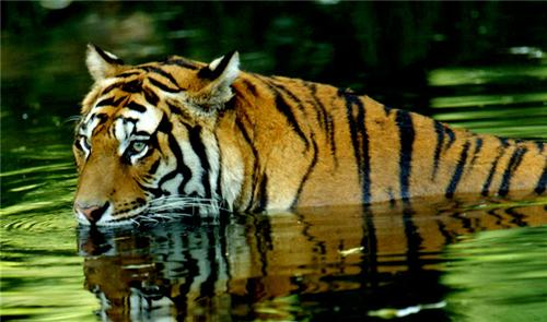 Wildlife park near Itanagar
