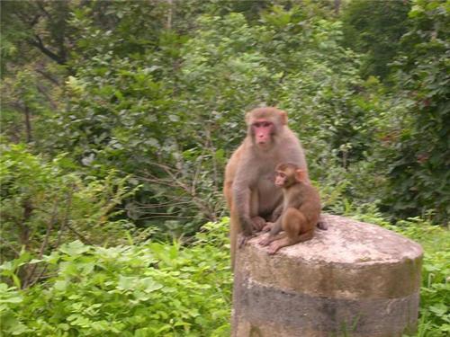 Kalesar National Park