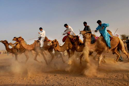 Desert Fest1
