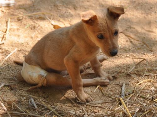 Animal welfare societies in Jalandhar