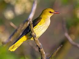 Best Time to visit Ramnagar Wildlife Sanctuary
