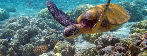 Marine Life in Marine National Park Jamnagar