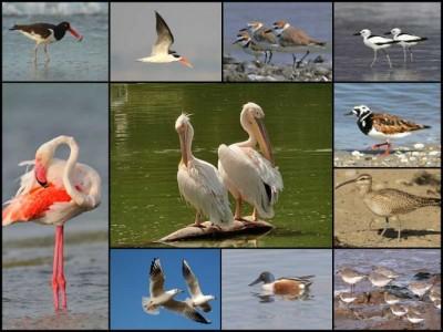 Migratory and Resident Birds at Marine National Park Jamnagar