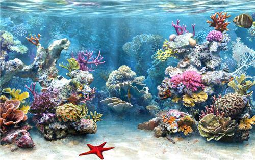 The beautiful Marine life in Marine National Park of Jamnagar