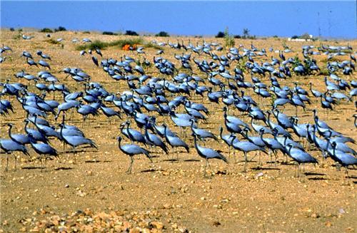 Wildlife Sanctuaries in Jodhpur