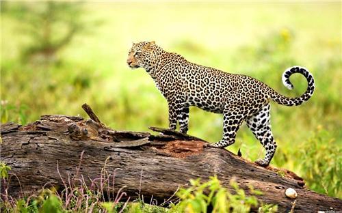 Wildlife in Jodhpur