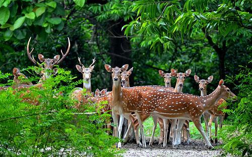 Sightseeing near Kalyani