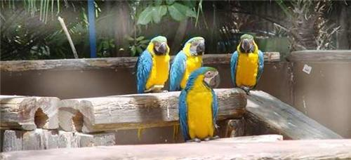 Facts about Vedanthangal Bird Sanctaury