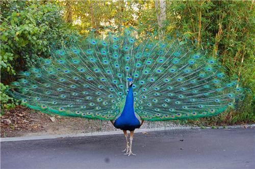 Native avian fauna of Kanpur