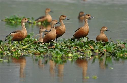 Birds in Kanpur