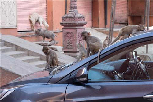 Wildlife species in Kanpur