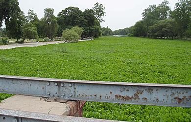 Kanjli Wetland