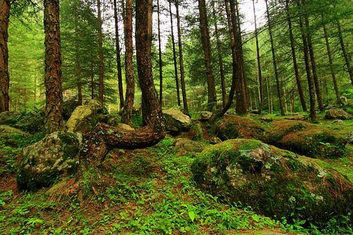 Kasol Forest