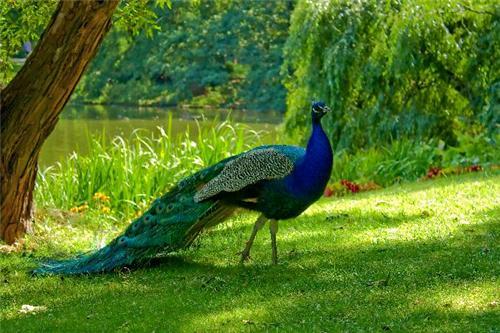 About Kais Wildlife Sanctuary