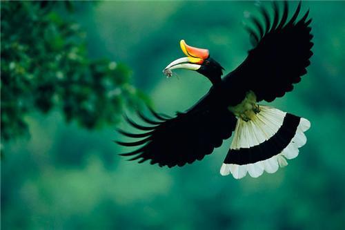 Birds in Kais Wildlife Sanctuary