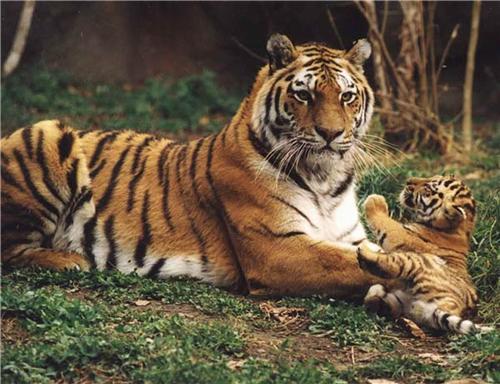 Wildlife in Ludhiana