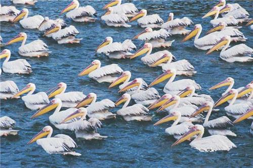 Birds found in the region of Thol Wildlife Sanctuary