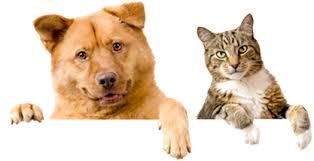 Animal Welfare Societies in Mehsana