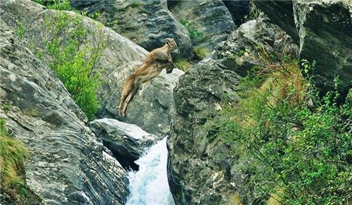 Enjoy the beauty of Pin Valley National Park near Manali