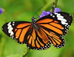 Sammilan Shetty's Butterfly Park in Mangalore