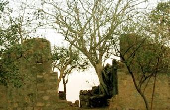 The Mogli Land-Mount Abu