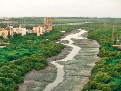 Mumbai Mangroves3