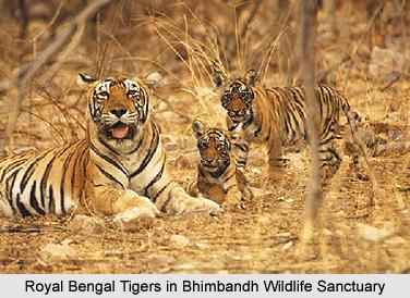 Wildlife in Bhimbandh Wildlife Sanctuary